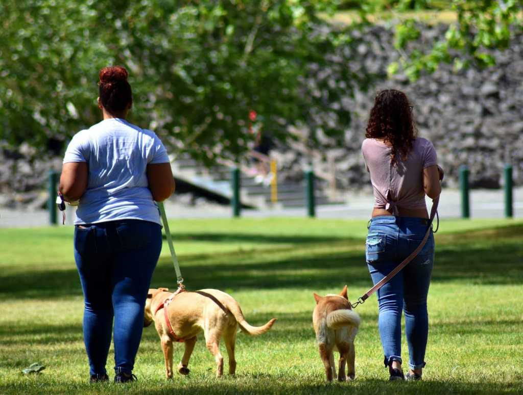 dog training loose lead