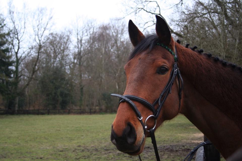 positive reinforcement horse training