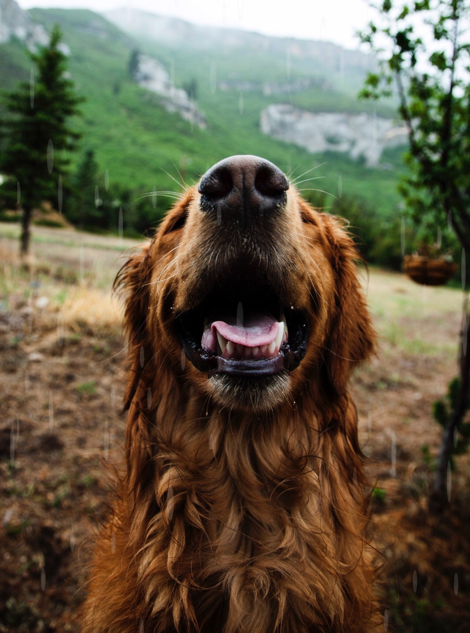 Positive Reinforcement helps a dog to feel happy, secure and settled in life. Dog training which uses this is most ethical