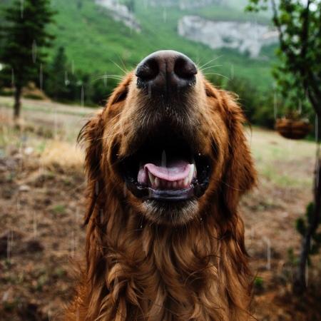 happy dog training gosport