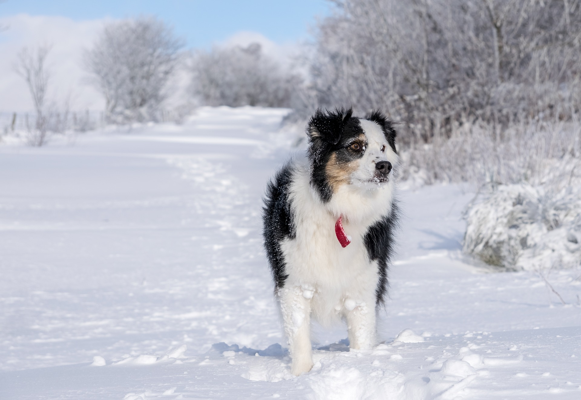 Dog training in the snow